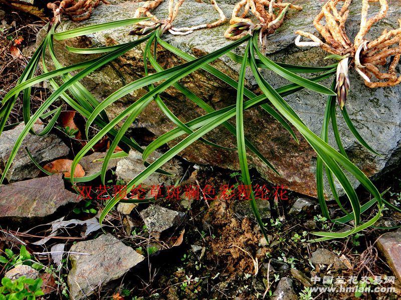 草覆虫结构示意图